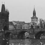 falcinelli ponte